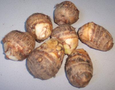 Taro tubers