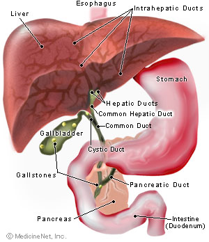 gallstone disease - where does gallstone come from?, Human Body