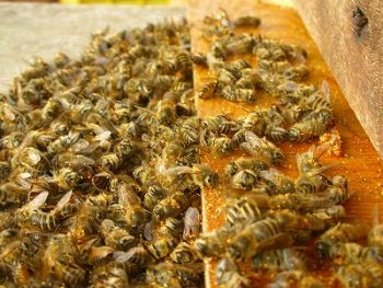 how to help prevent bees from dyig