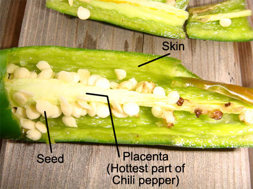 http://www.pyroenergen.com/articles10/images/chili-pepper-placenta.jpg